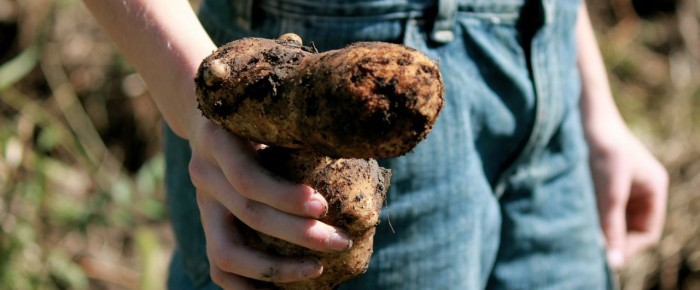 How to Store your Potato Crop so it Will Last the Longest!