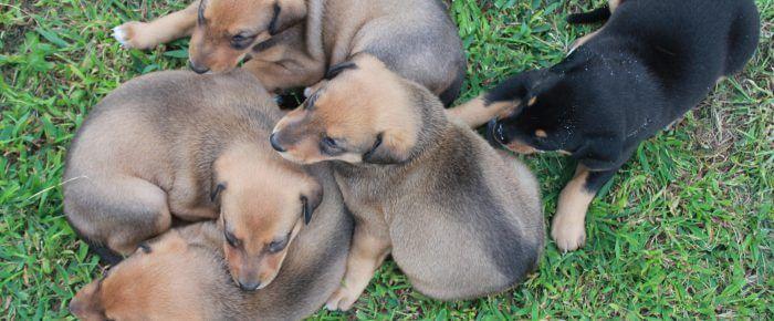 Puppies = Shenanigans