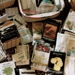 Make your own seed-starting mix: it's soooo easy!
