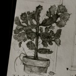 Introducing . . .  Sketchbook Thursdays