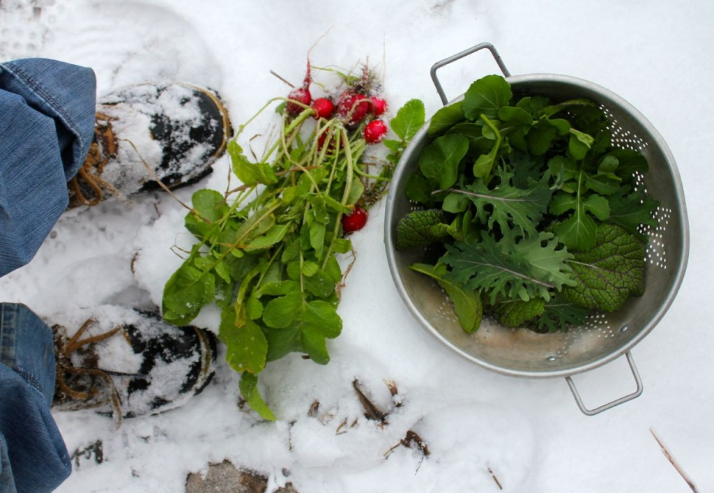 snowsalad