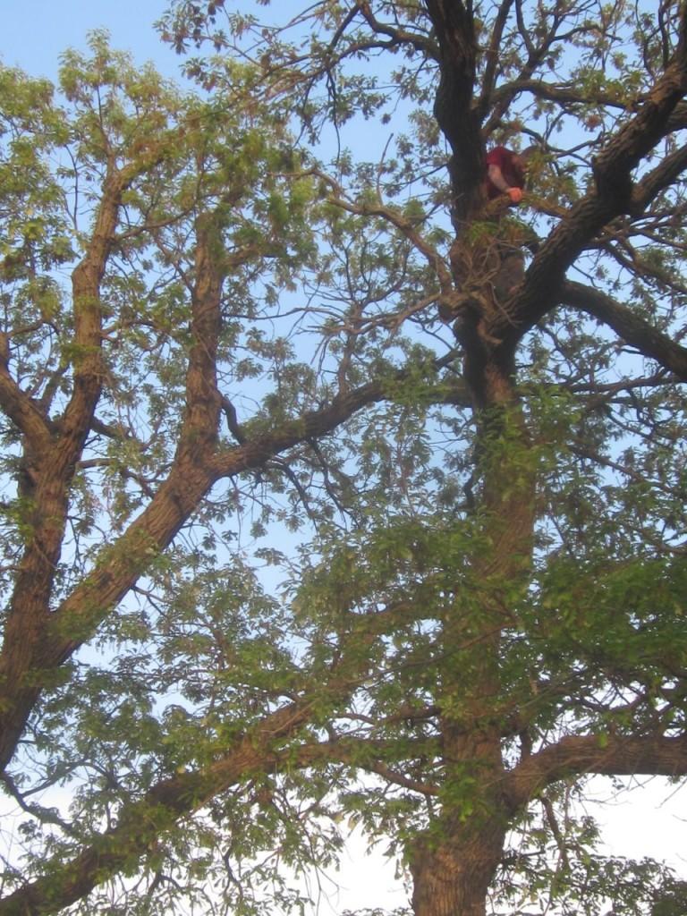 timtree