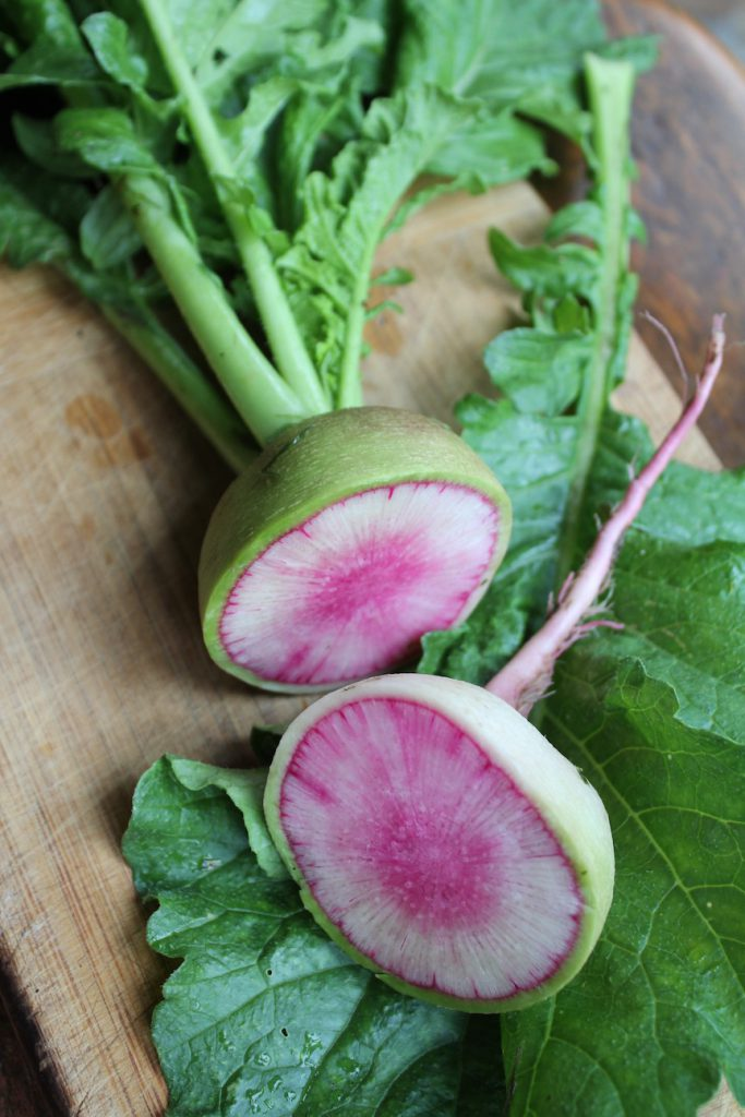 I love these things. :) Watermelon radishes, the first radishes. So good and so beautiful. And much more long-lasting than their small cousins.